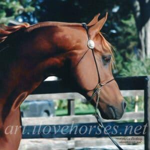 Monogramm Arabian Stallion