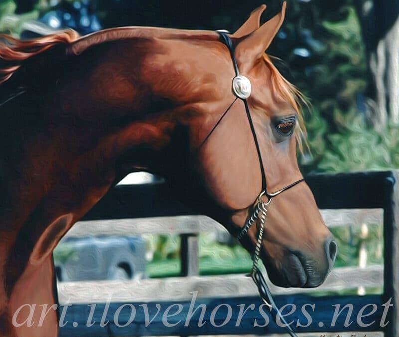 Monogramm Arabian Stallion, Mounted on 12″ x 12″ Canvas